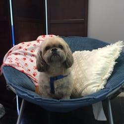 HollyWoof Pet Salon