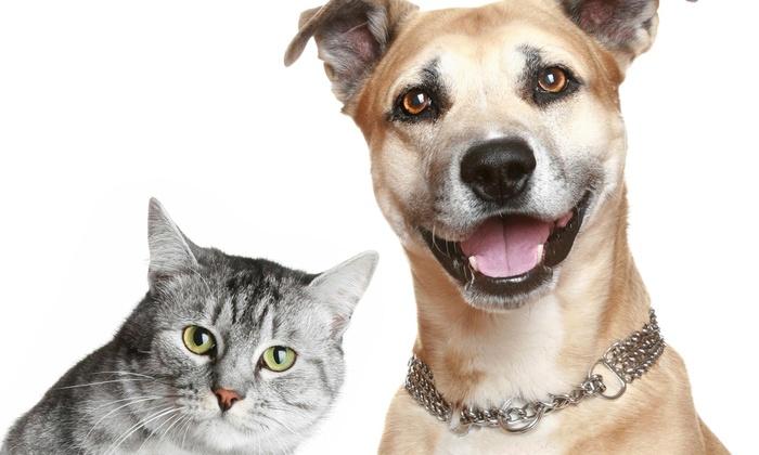 Ironhorse Veterinary Care