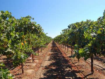 Own a Napa Vineyard