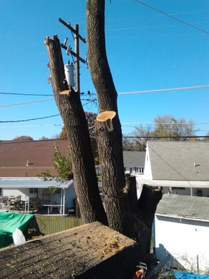 First Nature Tree Service