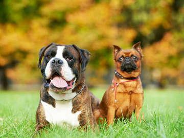 Pampered Pup Luxury Pet resort