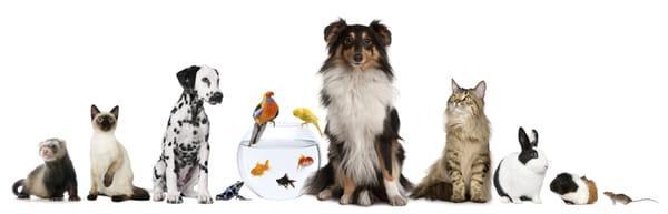 Elite Pet Services