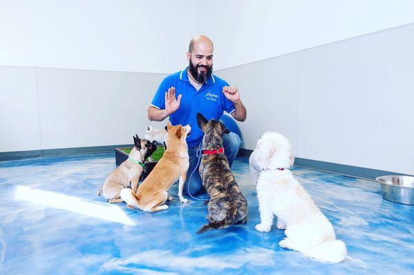 Milka Dog Grooming Pet Salon