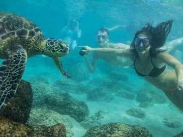 Hawaii Turtle Tours