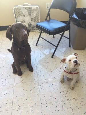 AG Dog Training and K9 Concierge