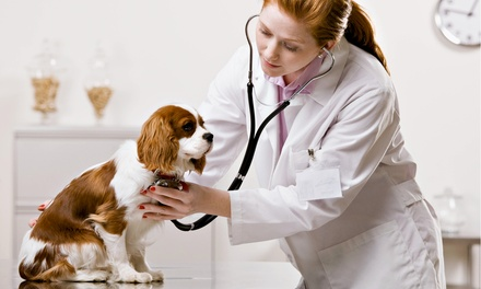 Synergy Animal Hospital