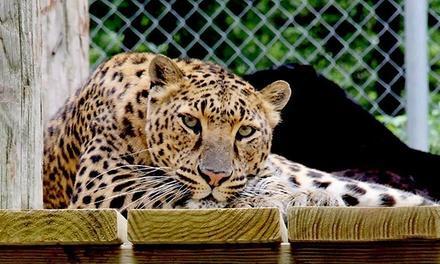 Wilderness Trails Animal Park