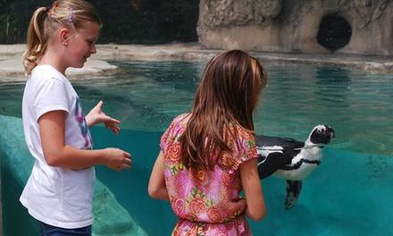 Childrens Zoo At Celebration
