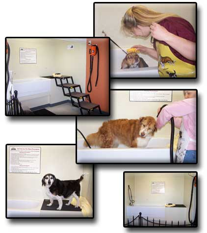 Huckleberry's Pet Parlor